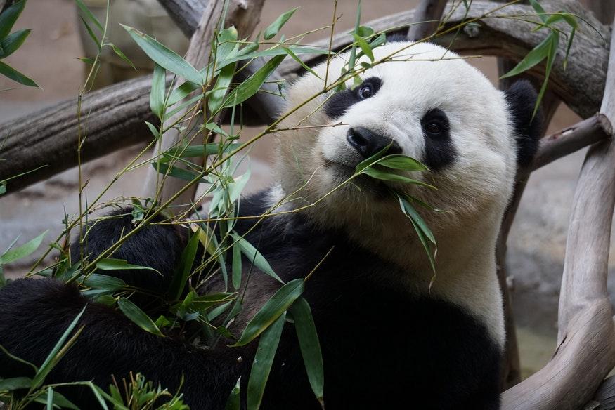 Google Panda: como funciona